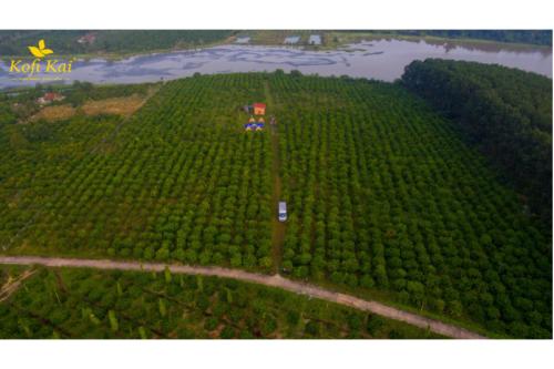 Từ nông trại tới thành phẩm: Điều gì làm nên sự đặc biệt của Kofi Kai